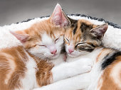 Looking down at two cute kittens sleeping in a white bed