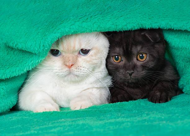 Two cute little kittens picture id496919792?b=1&k=6&m=496919792&s=612x612&w=0&h=bt4rwzvbxttyd9mpbb1vi02vwoij3ban9ksk jiv5cm=