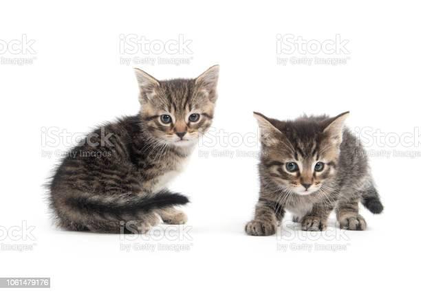 Two cute tabby kittens picture id1061479176?b=1&k=6&m=1061479176&s=612x612&h=dy5tf4y0ox1 hzdxaxs2cncgdgsglxzvyb1xtvrwp9g=
