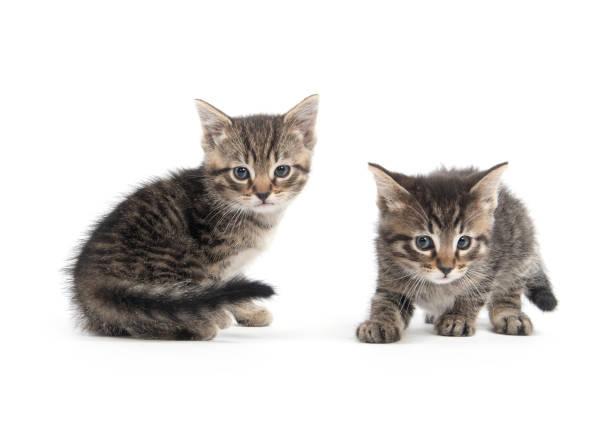 Two cute tabby kittens picture id1061479176?b=1&k=6&m=1061479176&s=612x612&w=0&h=0gfhqlfyjncm12tbne hcjzkaol7pvwvq0lgkbhkc e=