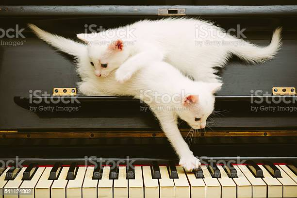 Two cute white playful kittens on piano picture id541124302?b=1&k=6&m=541124302&s=612x612&h=lq9udrsnlpisejhydfy9b062a5rzndsqcuuy5po0zas=