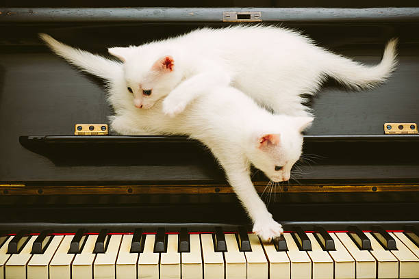 Two cute white playful kittens on piano picture id541124302?b=1&k=6&m=541124302&s=612x612&w=0&h=rt5ir8jowbaae3v7ickvunqsa khkyzlisk34fer8ss=