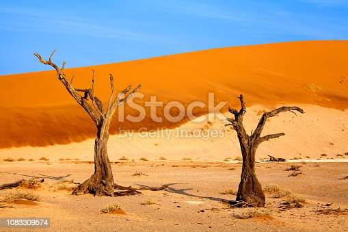 istock Two dead dry trees on orange sand dunes and bright blue sky background, Naukluft National Park Namib Desert, Namibia, Southern Africa 1083309574