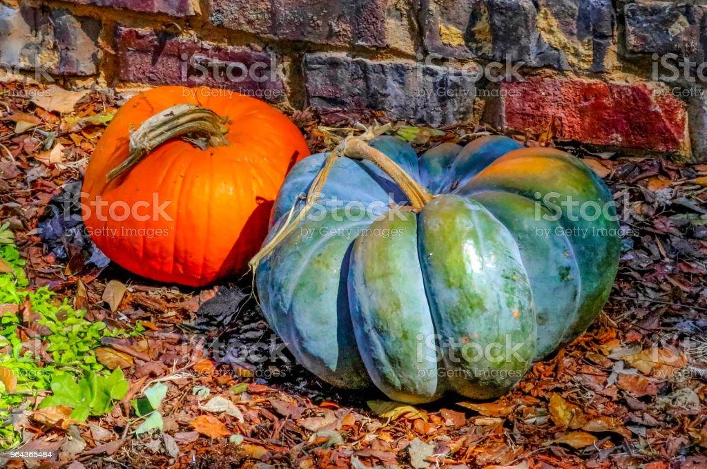 Twee decoratieve pompoenen door bakstenen muur op herfst bladeren - Royalty-free Bakstenen muur Stockfoto