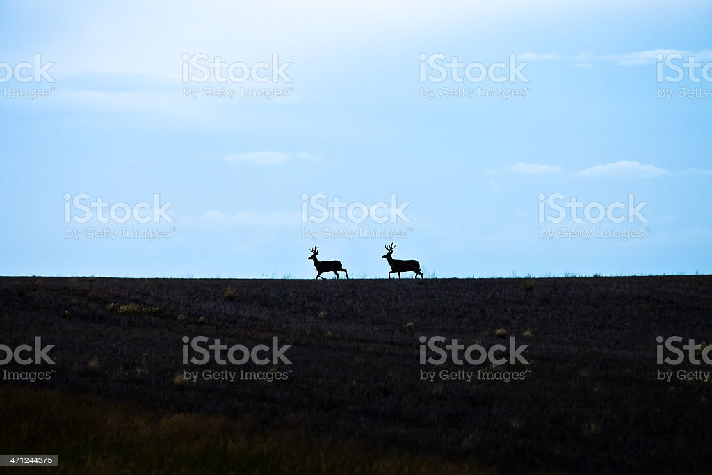Two Deer On Horizon royalty-free stock photo