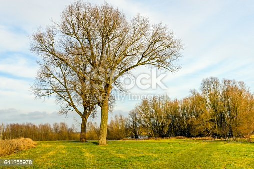istock Two different trees entwined in each other 641255978