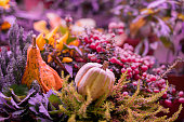 Two diffrent pumpkins on dark violet natural background, selective focus. Thanksgiving and Halloween concept, autumn colorful card. Background, copy space