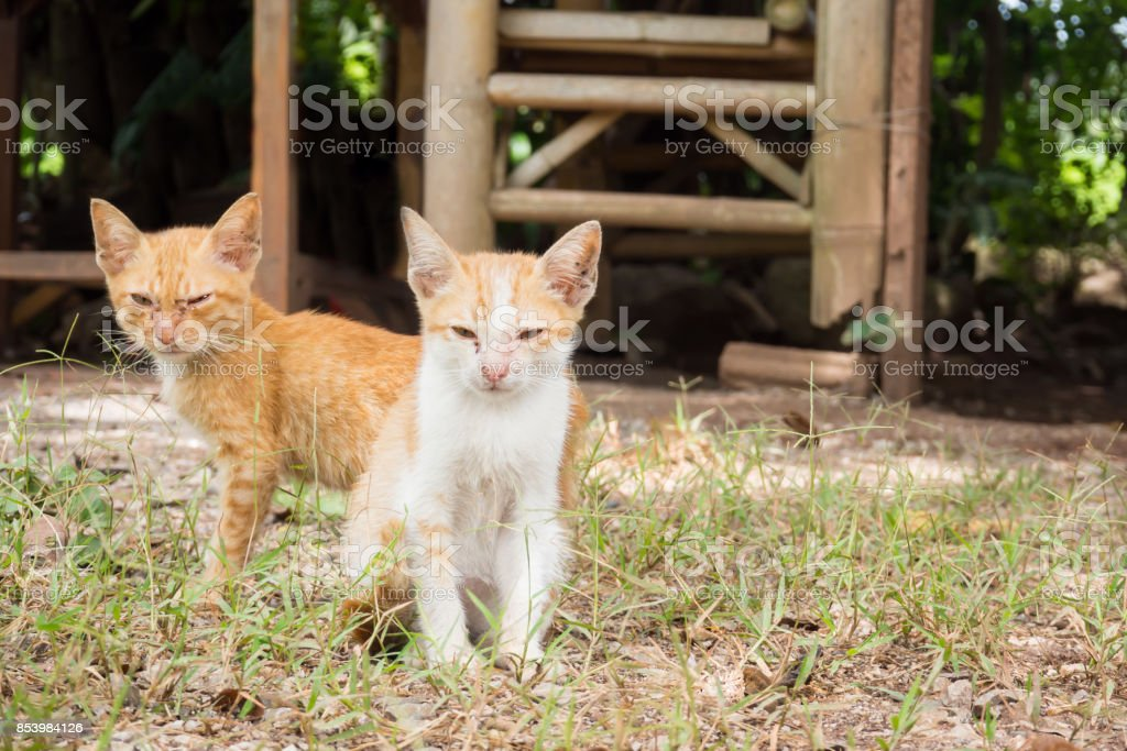 Two dirty yellow mongrel kitten sitting on ground. Looking to camera. stock photo