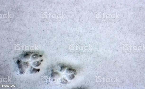 Two dog footprints in the snow picture id870927002?b=1&k=6&m=870927002&s=612x612&h=7ctdkym7i4hocakkx0xsobimk2baxbwjma8hbzcdu o=