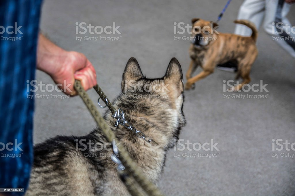 Two dog pets interacting outdoors stock photo