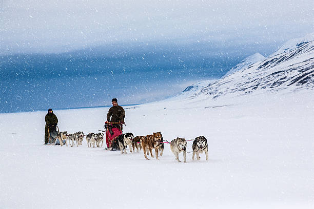 Two dog sleds mushing through snow covered field stock photo