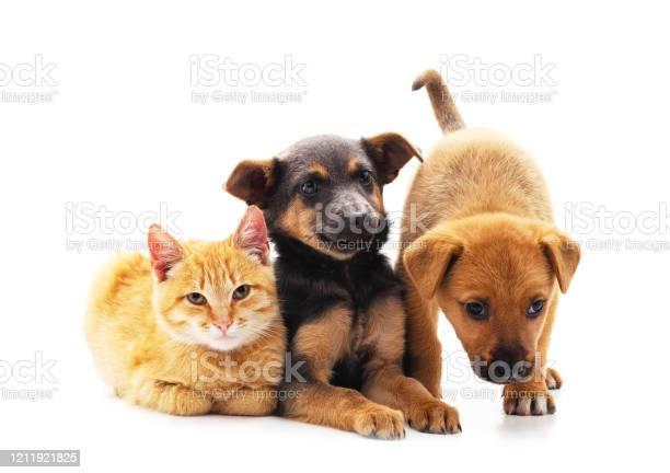Two dogs and a cat picture id1211921825?b=1&k=6&m=1211921825&s=612x612&h= ejffvy8ky8bak6wor4datxgib8z9woy7 dtbiwr dq=