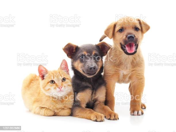 Two dogs and a cat picture id1251352680?b=1&k=6&m=1251352680&s=612x612&h=ybfh0mdsqjloqtkcvdycrofkarveusl7ii6wzlmz58m=