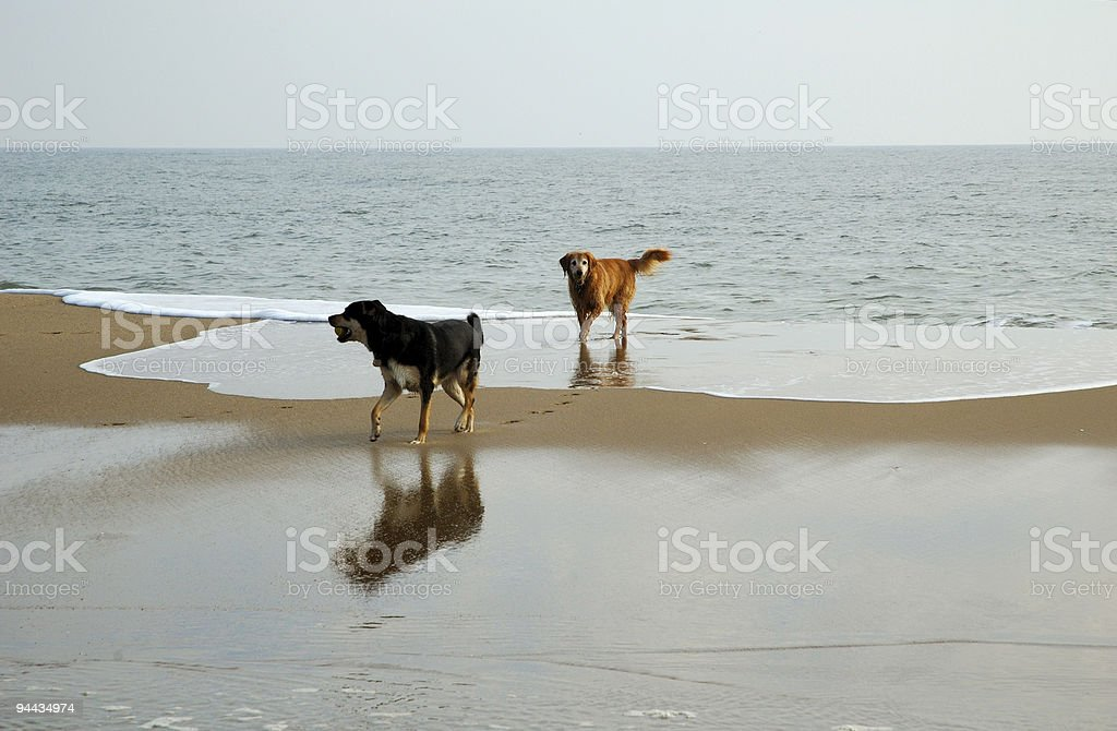 Two Dogs and an Ocean royalty-free stock photo
