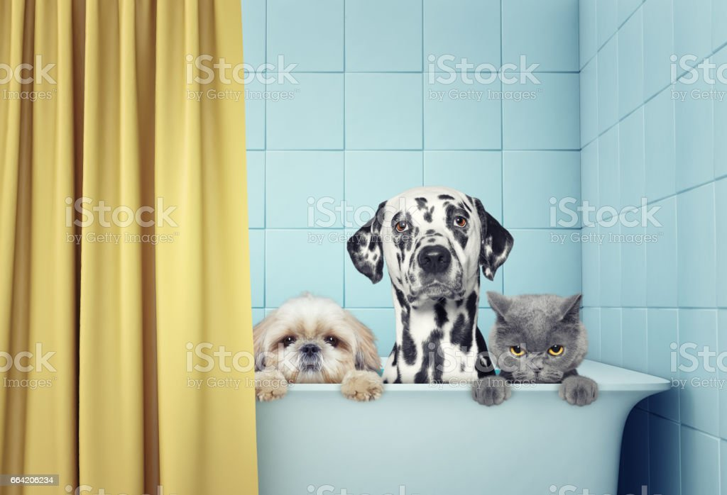 two dogs and cat in the bath stock photo
