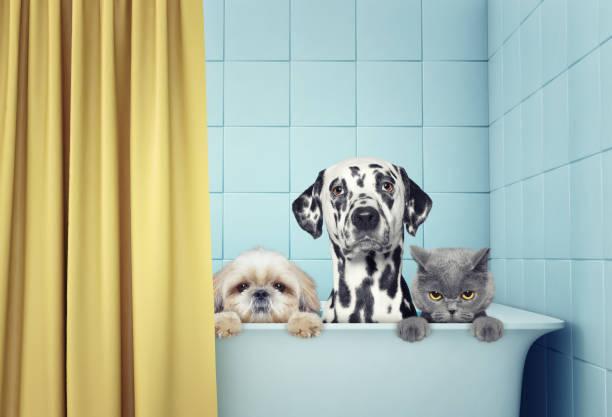 deux chiens et chats dans le bain - Photo