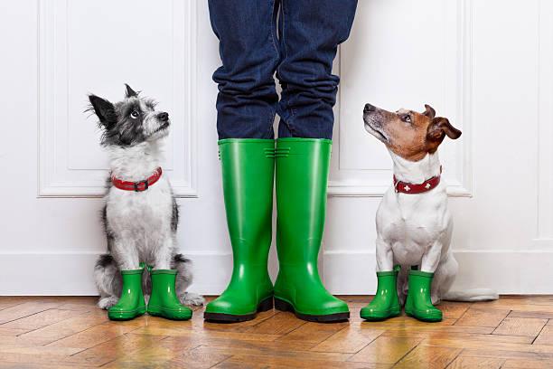 Two dogs and owner picture id456800029?b=1&k=6&m=456800029&s=612x612&w=0&h=cgp8 da553pcgmxpgbnoffxbp8 xoyjriika88xrfgs=