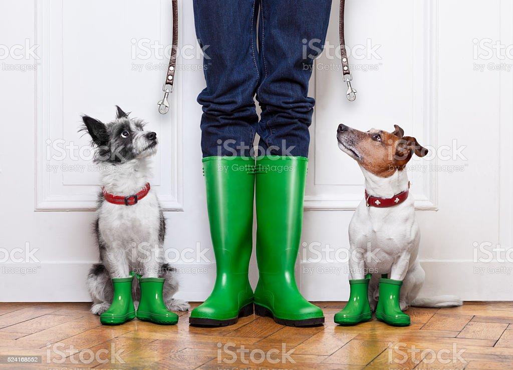Deux chiens et propriétaire - Photo