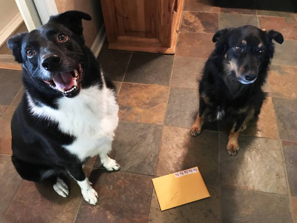 Two Dogs, Happiness, Home, Floor Tile, Envelope (1a1) stock photo