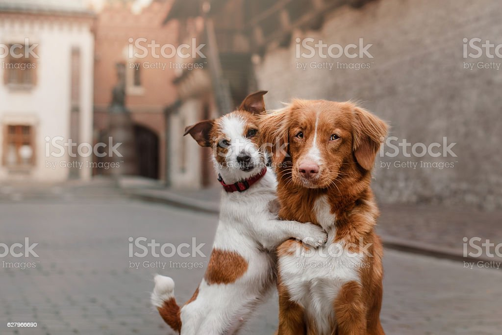 Two dogs in the city stock photo