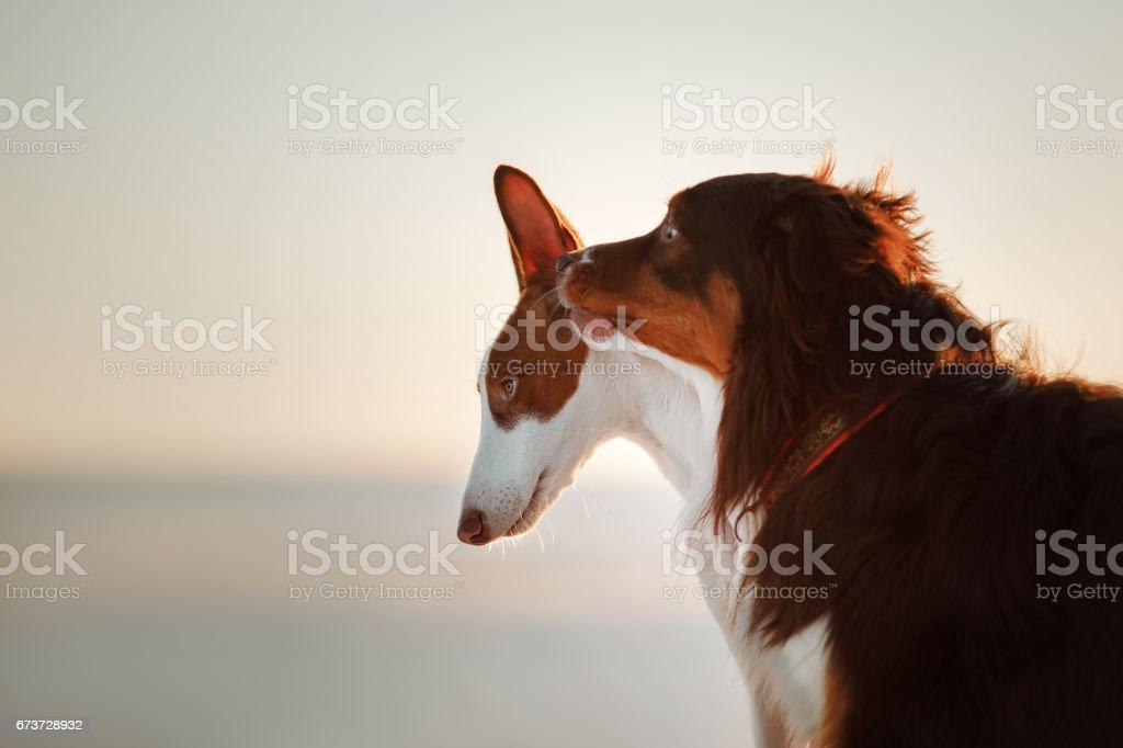 Deux chiens dans la neige photo libre de droits