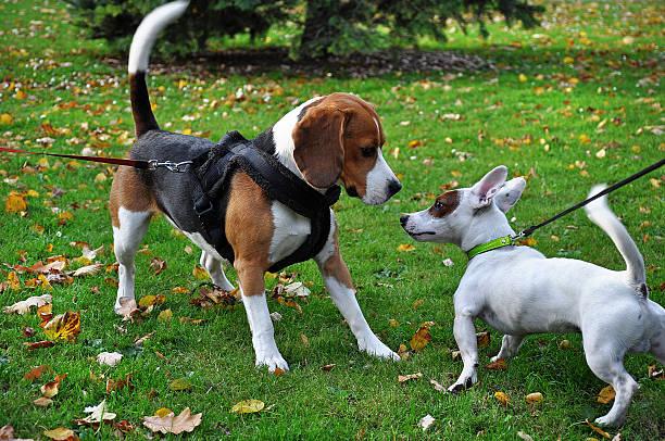 Two dogs learn picture id187120187?b=1&k=6&m=187120187&s=612x612&w=0&h=ymsifriewebhdew0j2plrgli ie7dkytubk45fniyce=