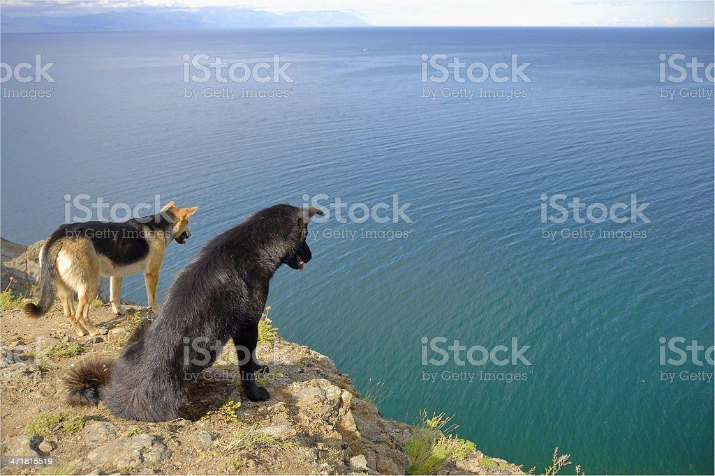 байкал озеро смотреть фото