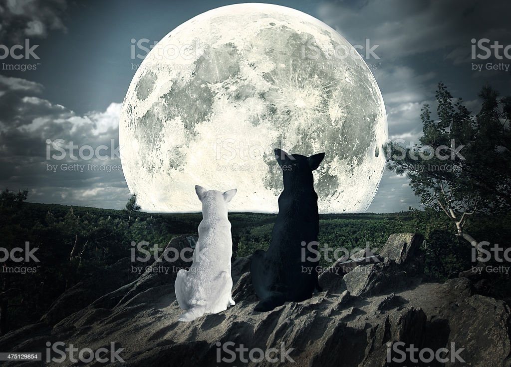 two dogs looking at the moon stock photo