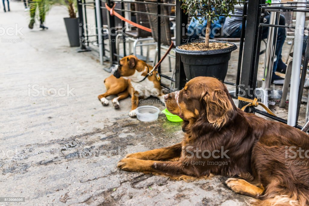Two dogs lying down by restaurant with food bowls stock photo
