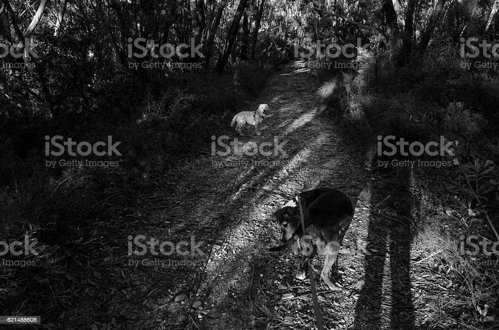 Two Dogs on a Dirt Road at Sunset foto stock royalty-free