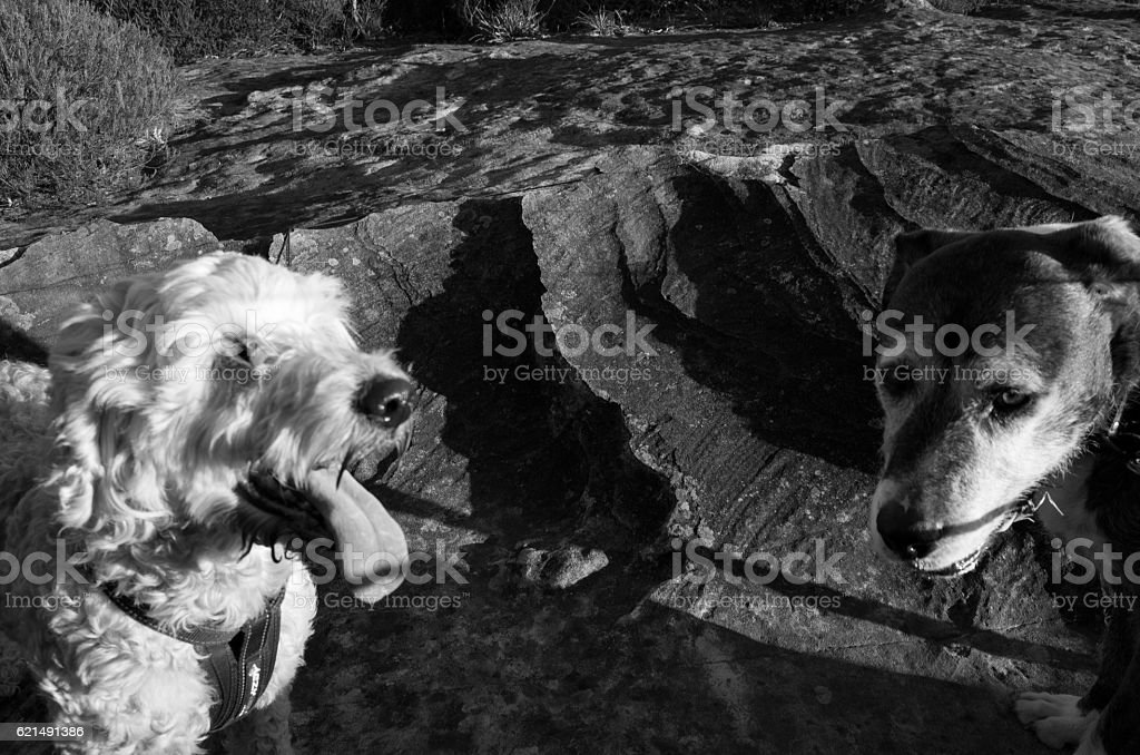 Two Dogs On a Rugged Rock at Sunset photo libre de droits