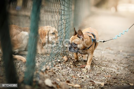 Two cute dogs on opposite sides of the fence