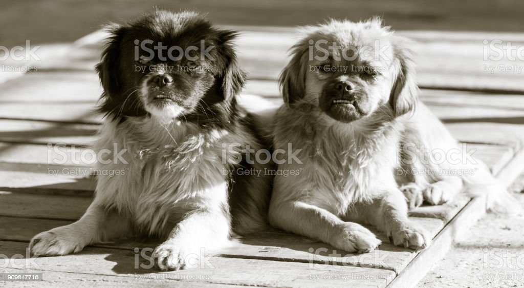 Two dogs on the nature stock photo