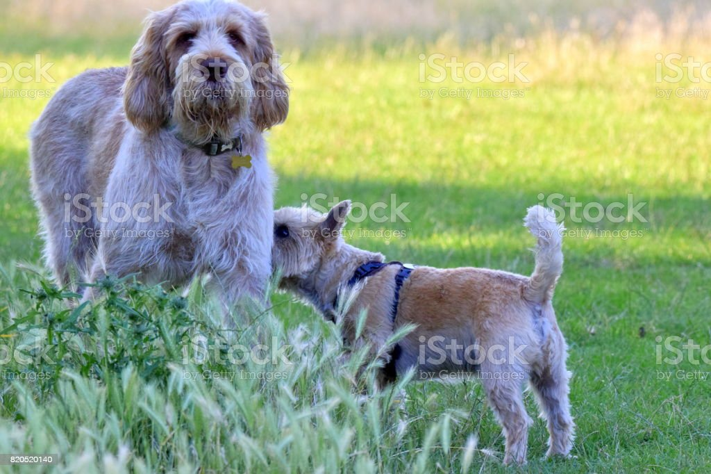 Two Dogs One Little And One Large Outdoors Funny Fotografie Stock