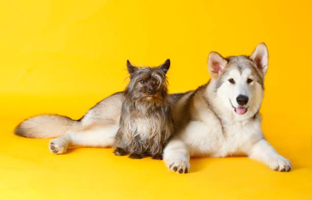 Two dogs picture id1016265586?b=1&k=6&m=1016265586&s=612x612&w=0&h=mdizdzlpsccv8hcexicmrjrcffzqio1hy17ifls2tsi=