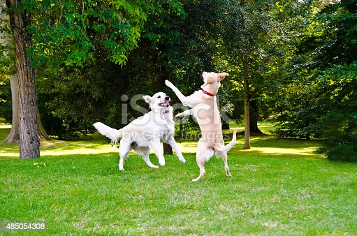 two dogs playing on a green grass outdoors