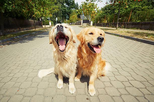 Two dogs picture id488384172?b=1&k=6&m=488384172&s=612x612&w=0&h=9zdpimpotoicg t8foafccv7 5w2svte1mzievm4yni=