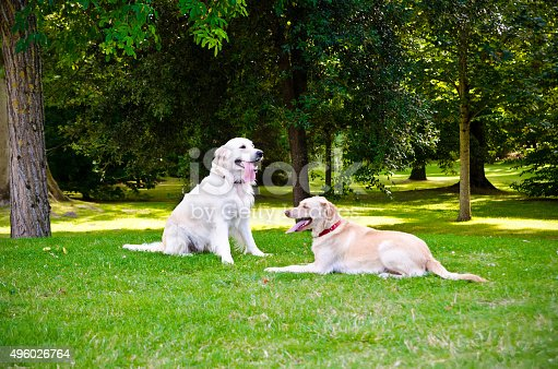 two dogs on a green grass outdoors