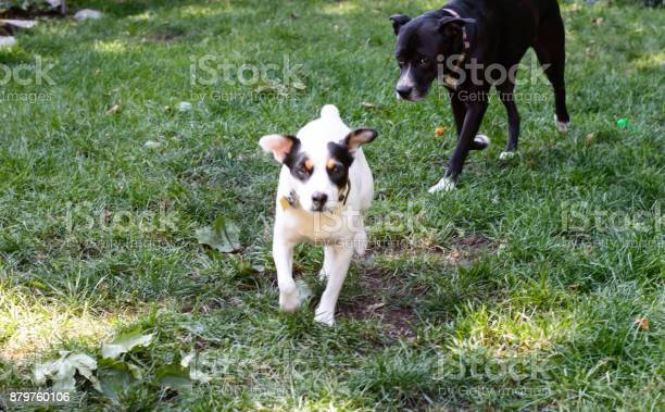 Two dogs playing in grass with room for copy picture id879760106?b=1&k=6&m=879760106&s=612x612&h=jikns8n  xignp cjgjxenu1zb3zgcfkvoaomf qaog=