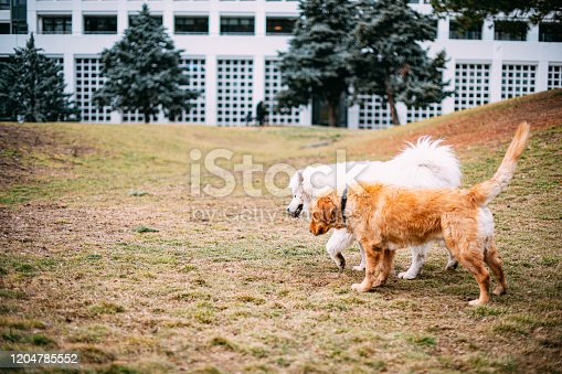 Two Dogs Playing in the Park