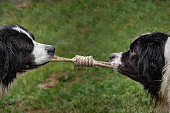 two dogs pull on the rope