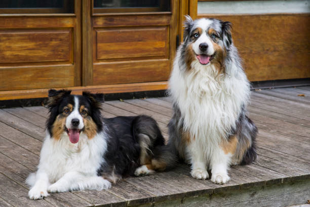 Two Dogs Sitting Perfectly stock photo