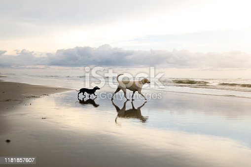 Dog playing at the beach.