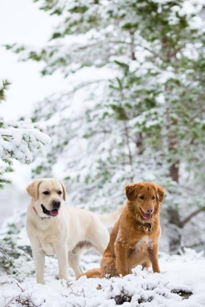 Two dogs walking picture id644666108?b=1&k=6&m=644666108&s=612x612&w=0&h=jljoelfhht6rjdid refxtp1kjzbbsccwyz5njau5eo=