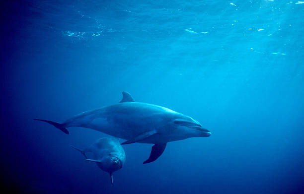 Zwei Delphine in Meer – Foto