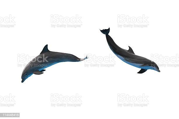 Two dolphins isolated on white picture id114445415?b=1&k=6&m=114445415&s=612x612&h=ejg9gcmnch kvnfgholz7e28zgveqjedqdj0oytmfpm=