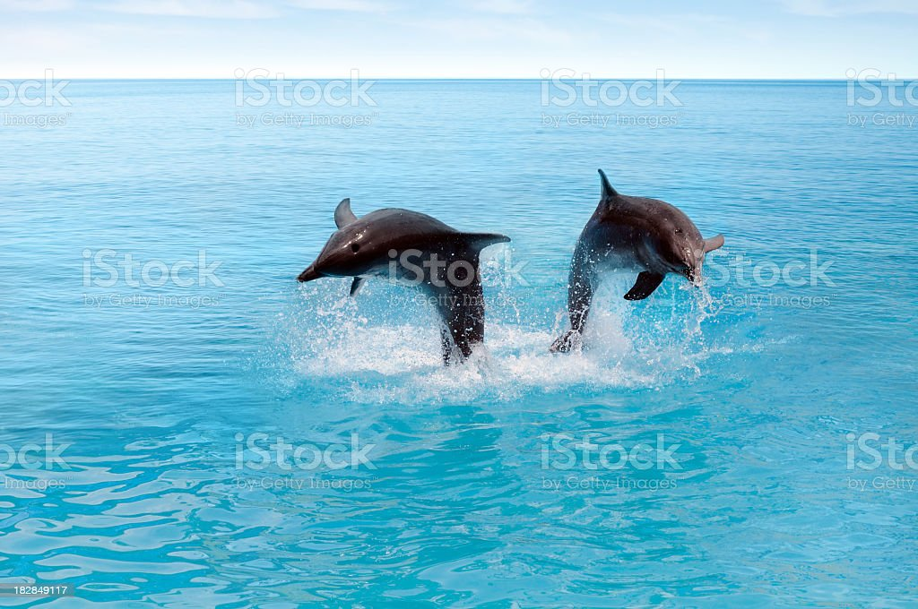 Two dolphins jumping in the ocean stock photo