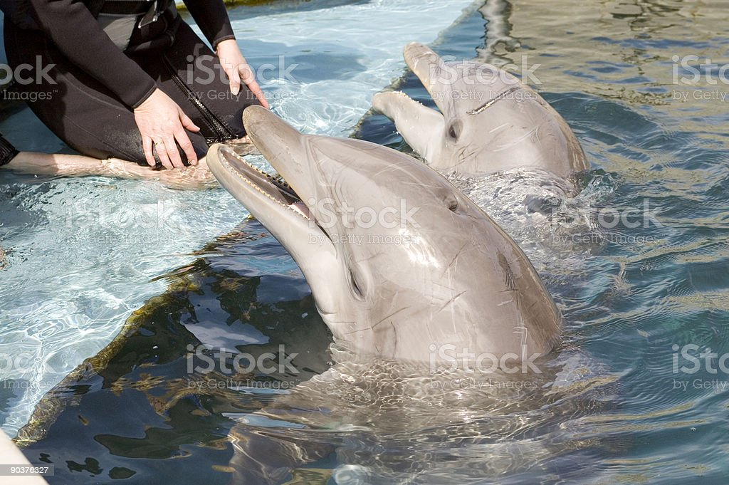 Two Dolphins royalty-free stock photo