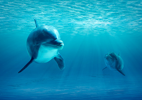 Two Dolphins swimming under water looking to camera