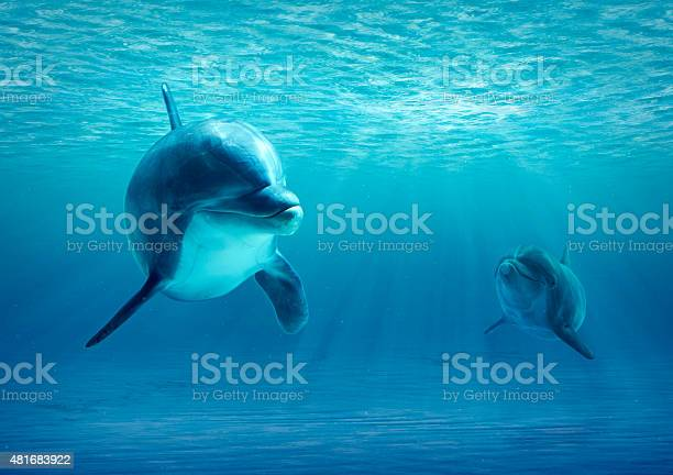 Two dolphins under water picture id481683922?b=1&k=6&m=481683922&s=612x612&h=rerp6zdtzuosmhpfelphhjag5pt38uffnclh vs9tig=